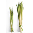 Palm Strips for Palm Sunday